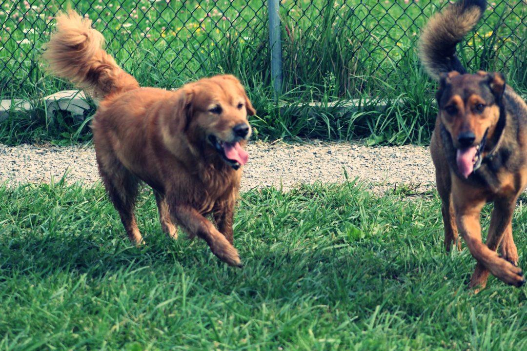 dog supplements - preventive health